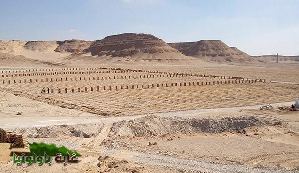 غابة باولونيا مصر (4)