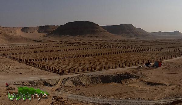 غابة باولونيا مصر (5)