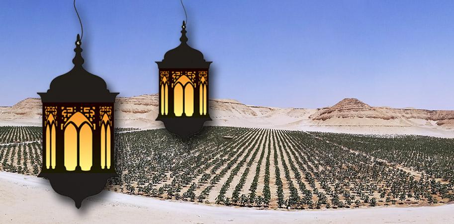 عرض رمضان من غابة باولونيا مصر